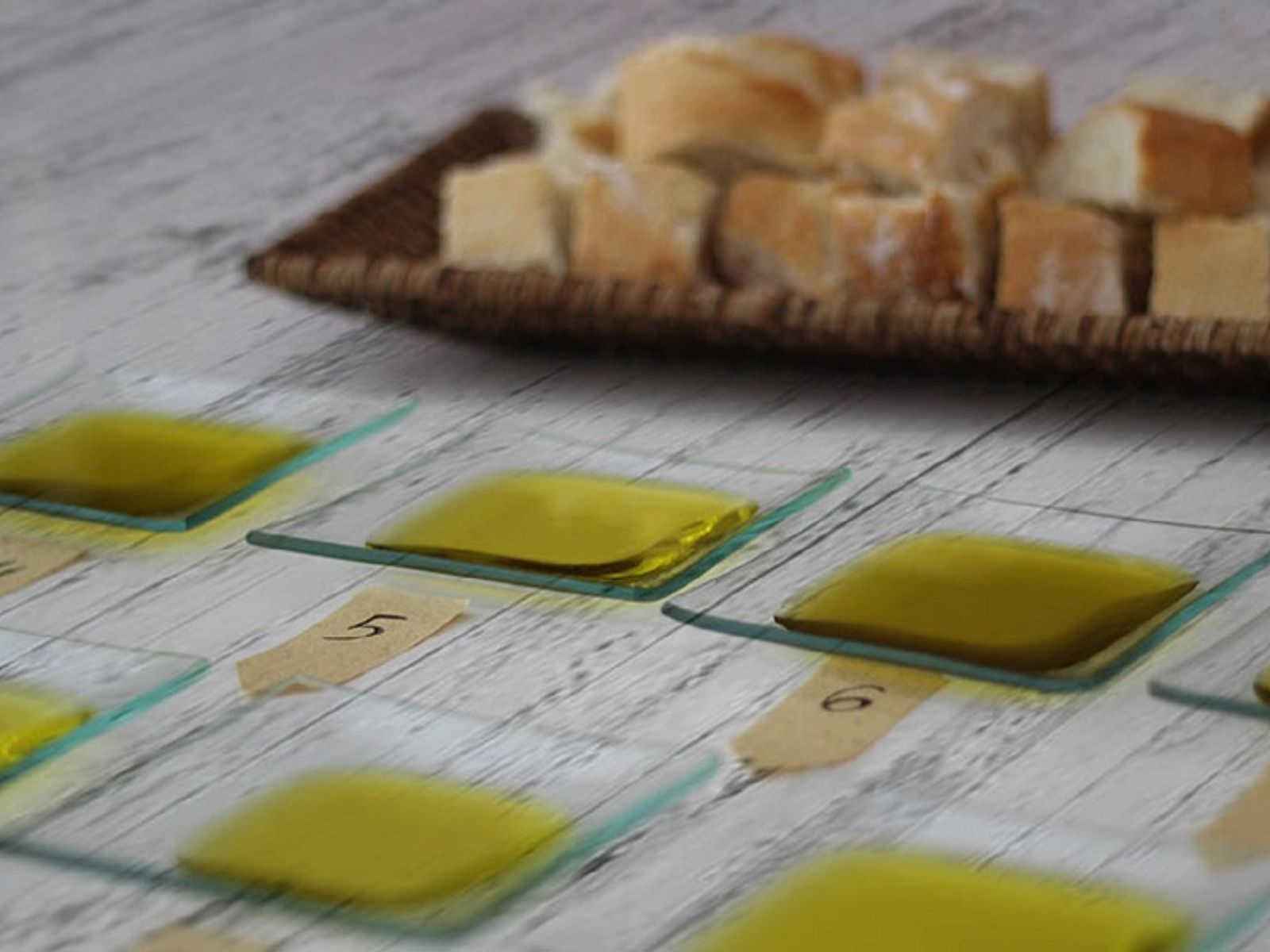 Spanish olive oil tasting trays with dipping bread
